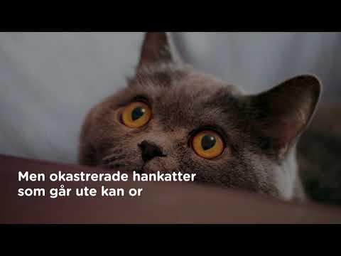 Hjälp oss utrota katt-hemlösheten  Kattkörkortet