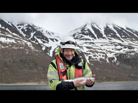 Responsible farmed salmon