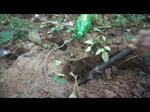 เลาะป่า-หาขุดจิโป่ม-ม่วนคัก-หา