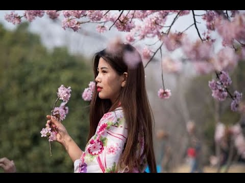 These pictures of China's Cherry Blossoms will mesmerize you!