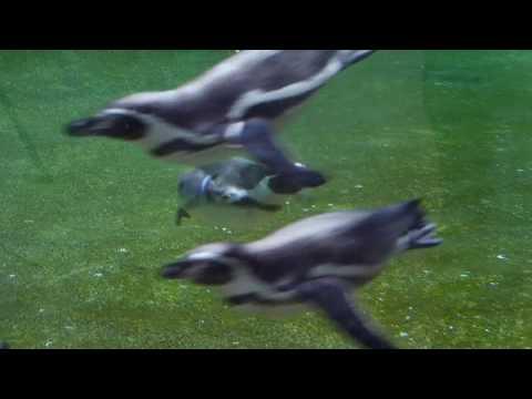 Zoo Rostock | Abtauchen im Polarium