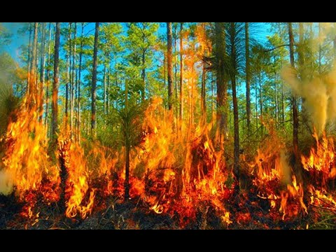 CONAP capacita a comunitarios para combatir incendios forestales