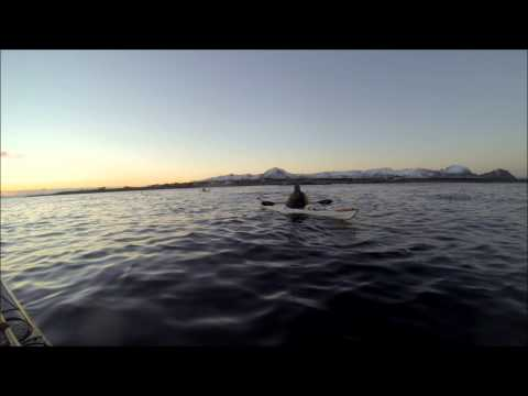 Orca Fun - Kayaking with Killer Whales