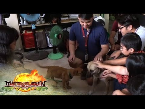 Emotional Support Dogs | Matanglawin