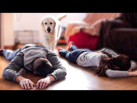 What Does My Dog Do When He Finds Us Fainted [Pretending to Faint]