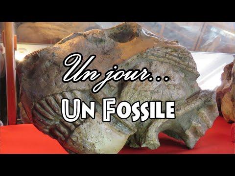 Un jour... Un fossile: jour 15, la collection Rubidge