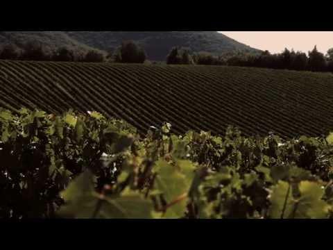 Lär känna vinbaronen Francesco Ricasoli