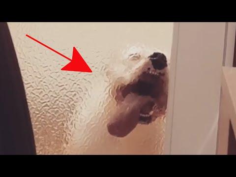 My Pet is Dumb: Pet Fails | FailArmy