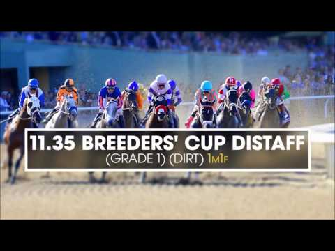 Breeders' Cup previews with Millie Ball - Friday 4th November 2016