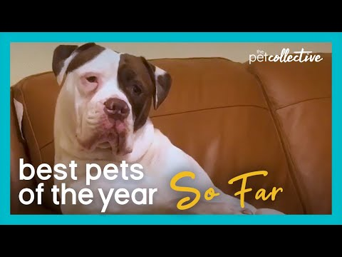 Best Pets Of The Year...So Far: PART I (2020)