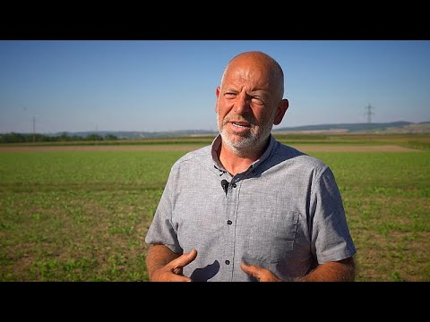 What are cover crops? The role of protective plants for farm land.