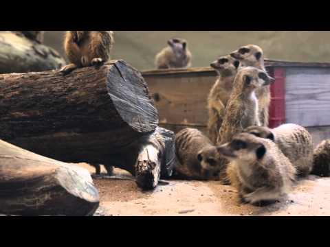 Djuraktiviteter på Parken Zoo Reklamfilm 2015