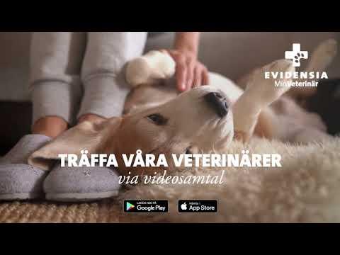 Boka videosamtal med våra veterinärer