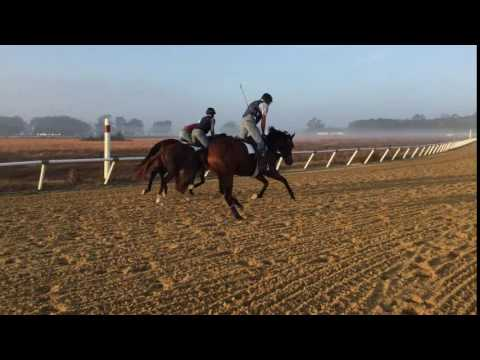 2015 Data Link - Miss Clare -Filly -on the outside.  Dec 2016