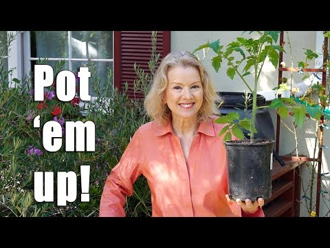 Tomato Growing TIPS and Potting Up to Cloth Pots | Garden Vlog