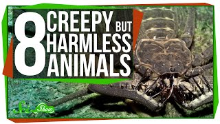 8 Creepy Animals That Are Actually Harmless