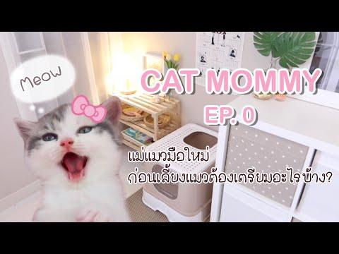 🎀-CAT-MOMMY-EP.0- -เลี้ยงแมวต้