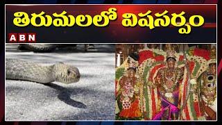 తిరుమలలో విషసర్పం | Poisonous Snake Found In Tirumala | ABN Telugu - ABNTELUGUTV