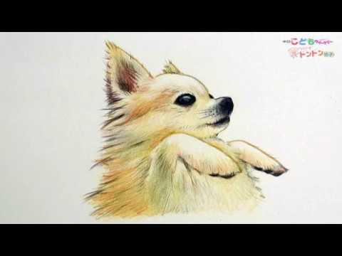 犬 イラスト リアル 関連動画 スマホ対応 動画ニュース