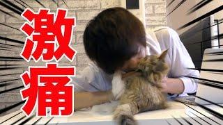 子猫 甘噛み『【虐待】一瞬で直る噛み癖の直し方がエグイ???』などなど