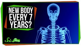 Do You Really Have a New Body Every 7 Years?