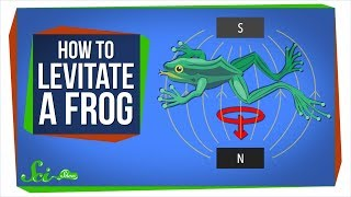 Diamagnetism: How to Levitate a Frog
