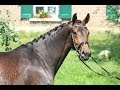 Dressuurpaard Beauty met extra beweging