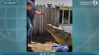 انتبه من التمساح