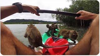 Monkeys Invade Kayaker   Tiny Fruit Ninjas