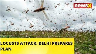 LOCUSTS ATTACK: DELHI PREPARES PLAN |NewsX - NEWSXLIVE