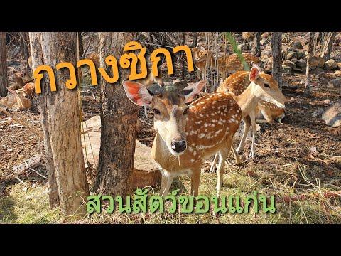 กวางซิกา-#สวนสัตว์ขอนแก่น