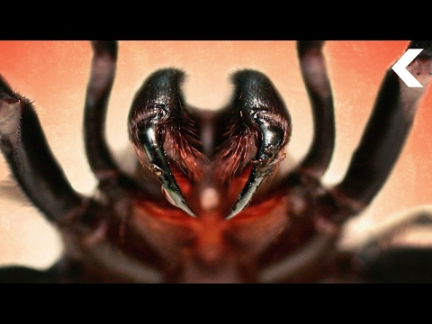 The World's Deadliest Venom Could Save Your Life