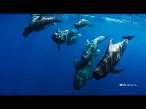 Go Deeper | Planet Earth: Blue Planet II | Premieres Saturday, January 20 @ 9/8c on BBC America