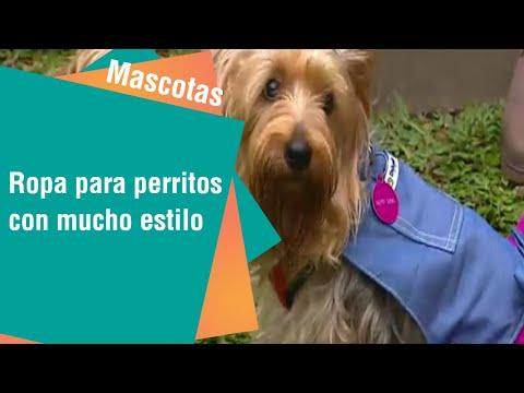 Ropa para perritos con mucho estilo   Mascotas