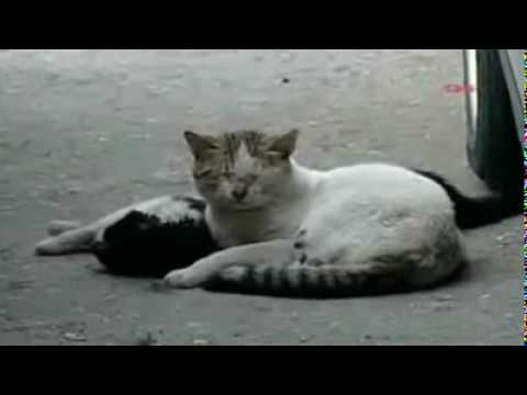 Video: Vis dar manai, - kad gyvūnai negali mylėt?
