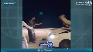 سائق خليجي يصدم بإبل سائبة