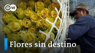 Colombia: el coronavirus marchita el sector floricultor