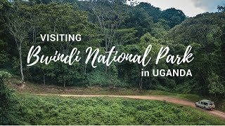 Exploring Bwindi Impenetrable National Park