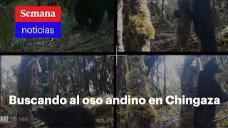 Buscando al oso andino, el oso de suramérica | Vicky en Semana