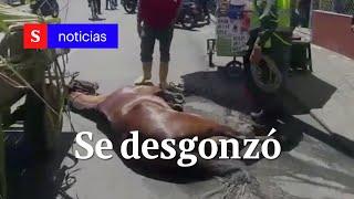 Caballo se desgonzó en plena vía de Tuluá, Valle del Cauca | Semana Tv