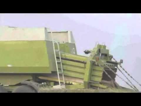 Video: Tikras ūkininkas, - myli savo derlių...