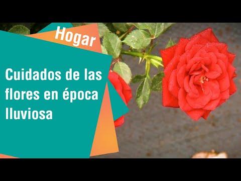 Tips para el cuidado de las flores en época lluviosa | Hogar