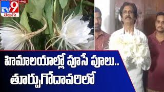వికసించిన బ్రహ్మ కమలం : East Godavari - TV9 - TV9
