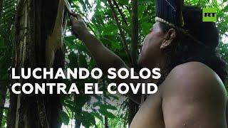 Los indígenas de Brasil recurren a remedios tradicionales para tratar el covid-19