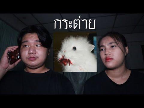 พวกเราซื้อ-กระต่าย-มาจาก-Dark-