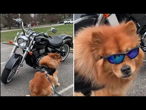 Biker dog is ready to hit the open road