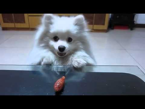 Dog Trying To Reach Sausage