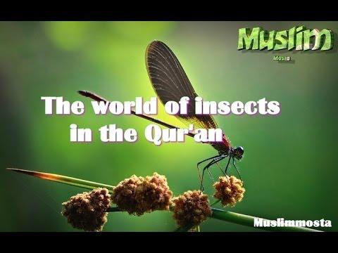 عالم الحشرات في القرآن الكريم- The world of insects in the Qur'an ᴴᴰ