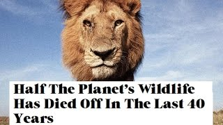 Half The Planet's Wildlife Has Died Off In The Last 40 Years - End Times Warning