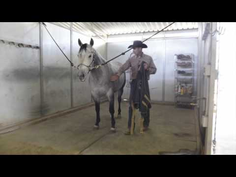 Measuring Horses for the Correct Sheet Size